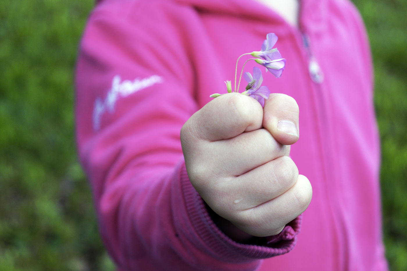 Une fleur, un patrimoine vivant