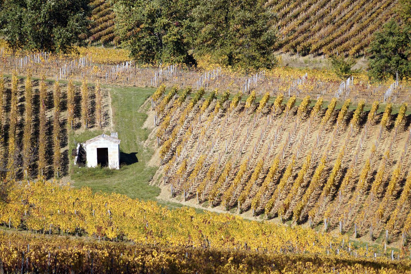 Cabane de vignes à Saint-Émilion
