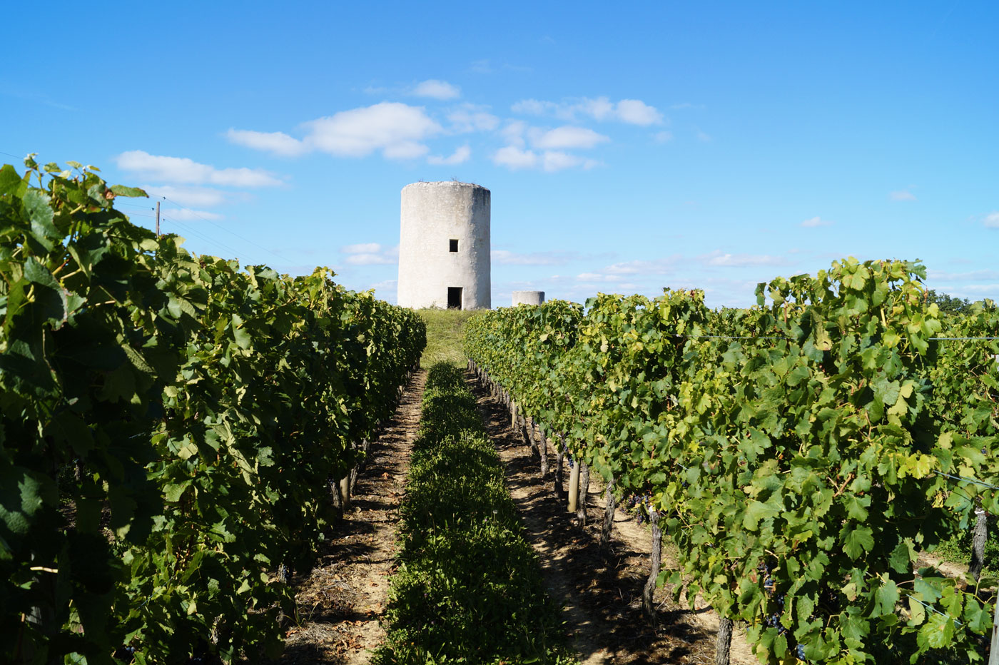 Patrimoine viticole et monument historique de Saint-Émilion