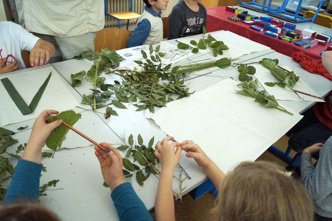 Les plantes de notre coteau