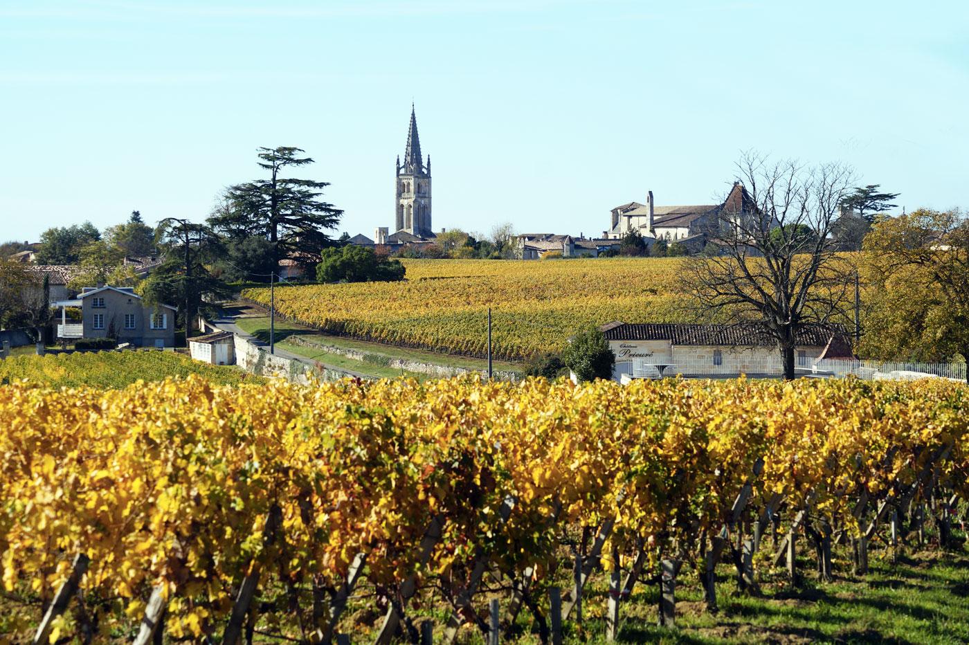 Saint-Émilion et ses vignes