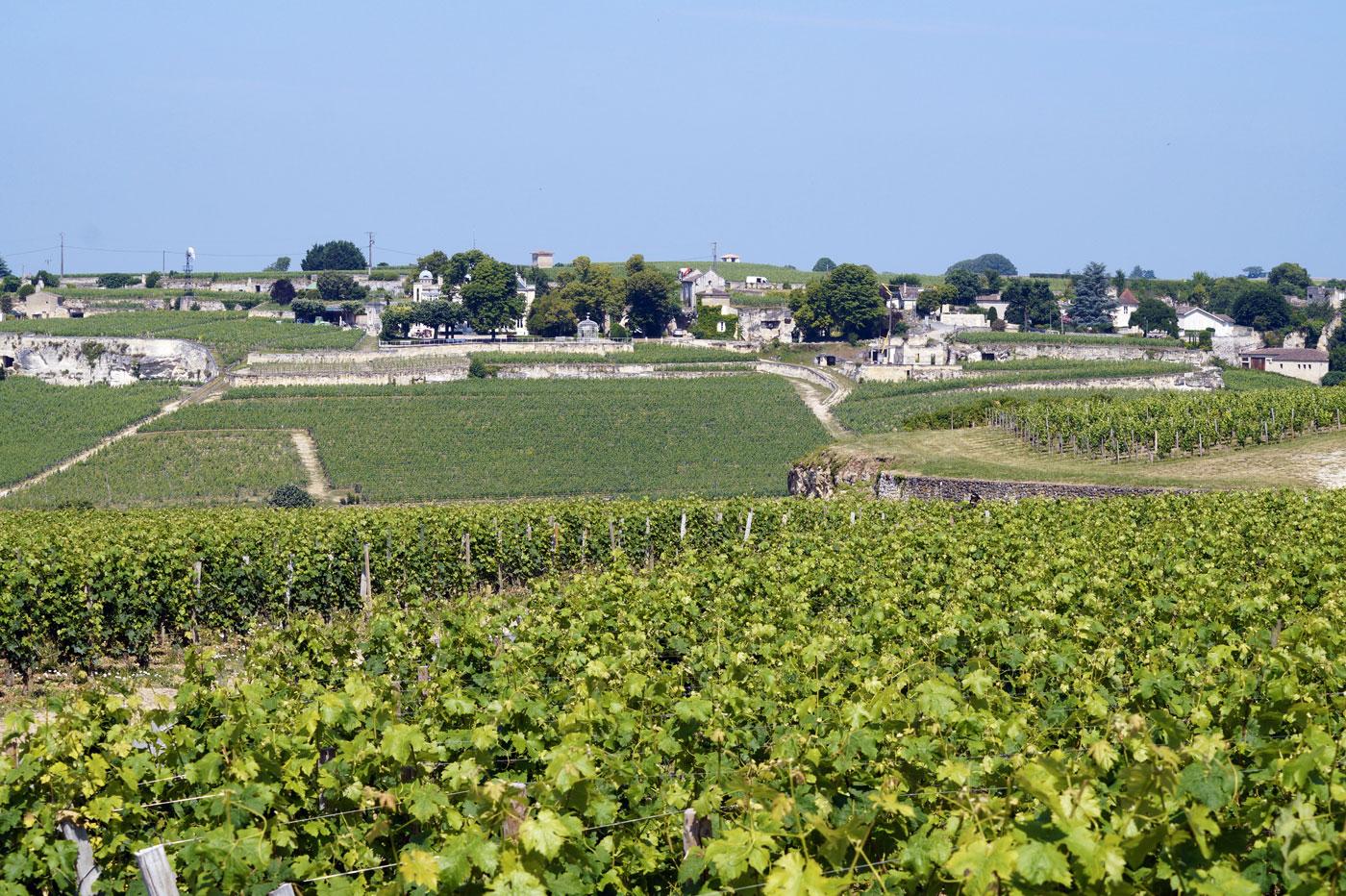 Vignes sur le plateau calcaire à Saint-Émilion